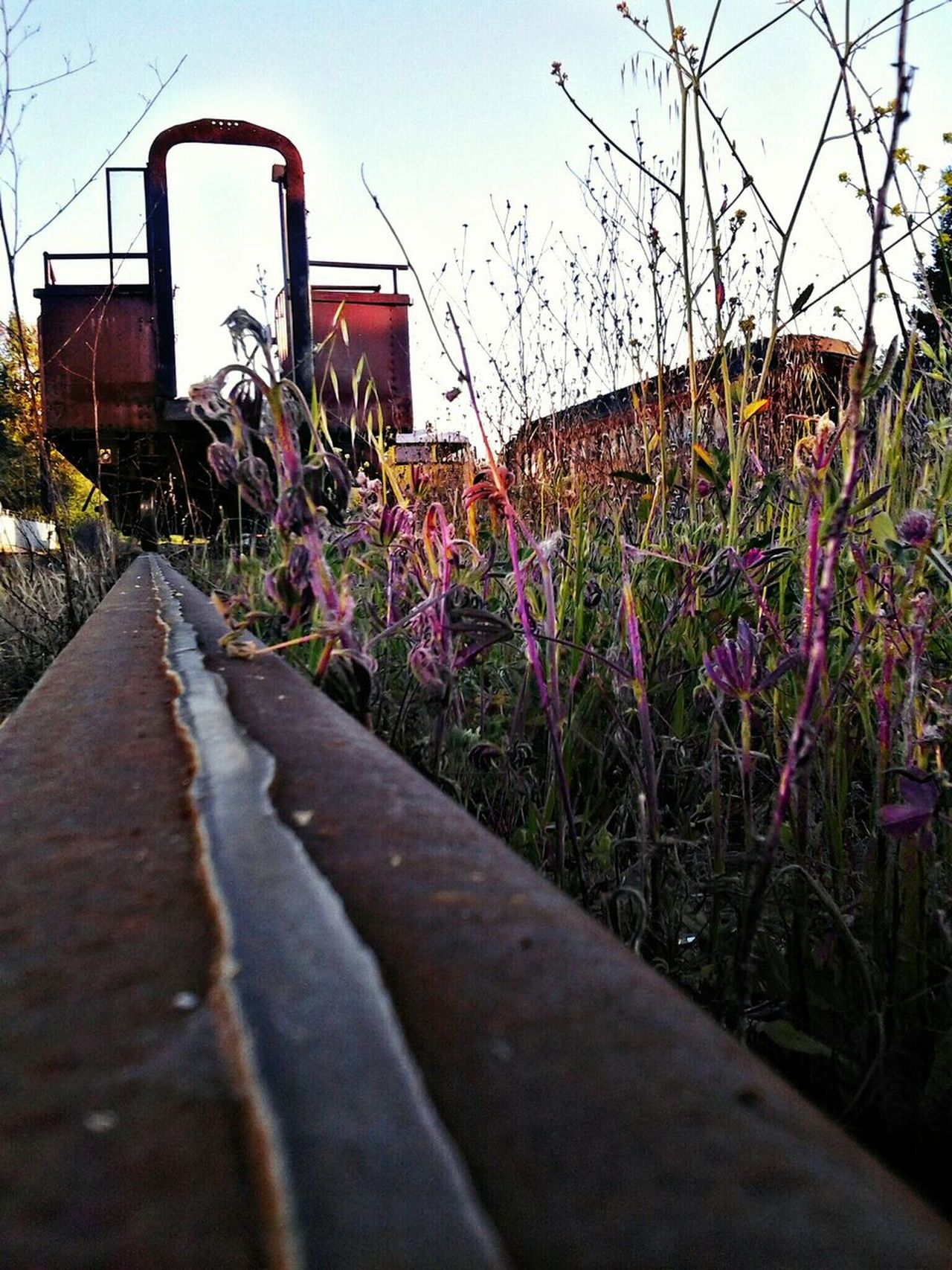 Outdoors Art Is Everywhere Trains & Railroad EyeEmNewHere Skunk Train Willits California To Fort Bragg California Trainlover Children And Trains Wilderness Area Train Tracks Skunk Train Trainphotography Northern California Sunset Natures Canvas Beauty In Nature No People The Great Outdoors - 2017 EyeEm Awards