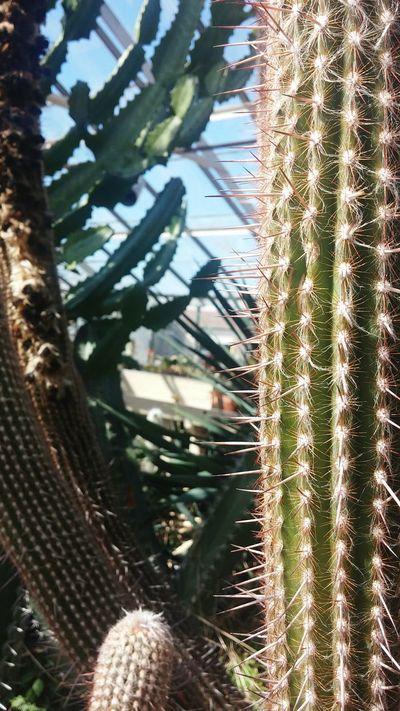 Ouch! 🌵 Botanical Gardens Buffalo Cactus