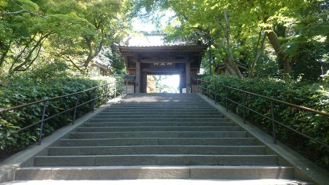 どこにいても寺がすき。