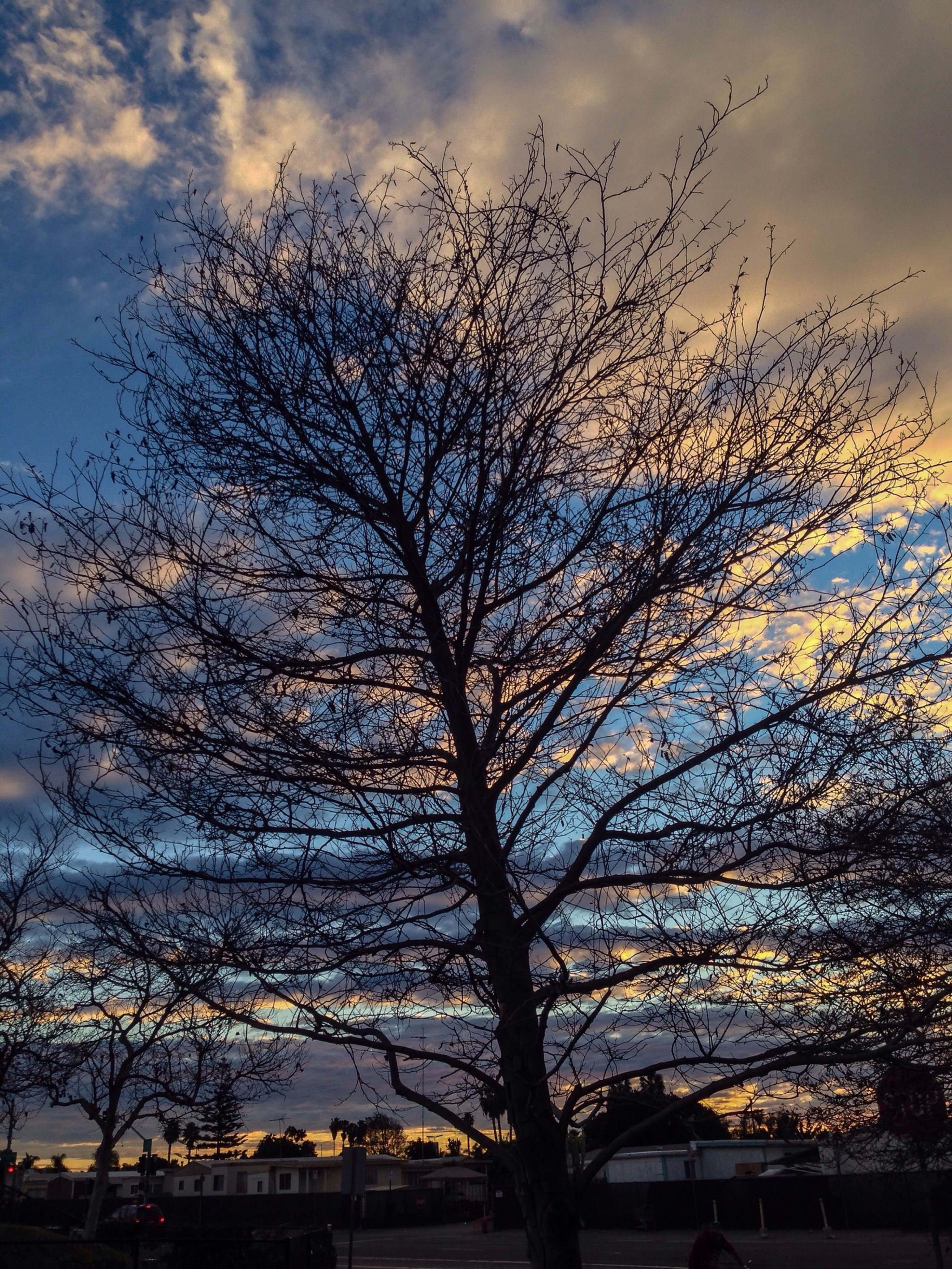 tree, bare tree, sky, branch, silhouette, sunset, low angle view, built structure, building exterior, cloud - sky, nature, architecture, tranquility, beauty in nature, scenics, dusk, tranquil scene, cloud, outdoors, growth