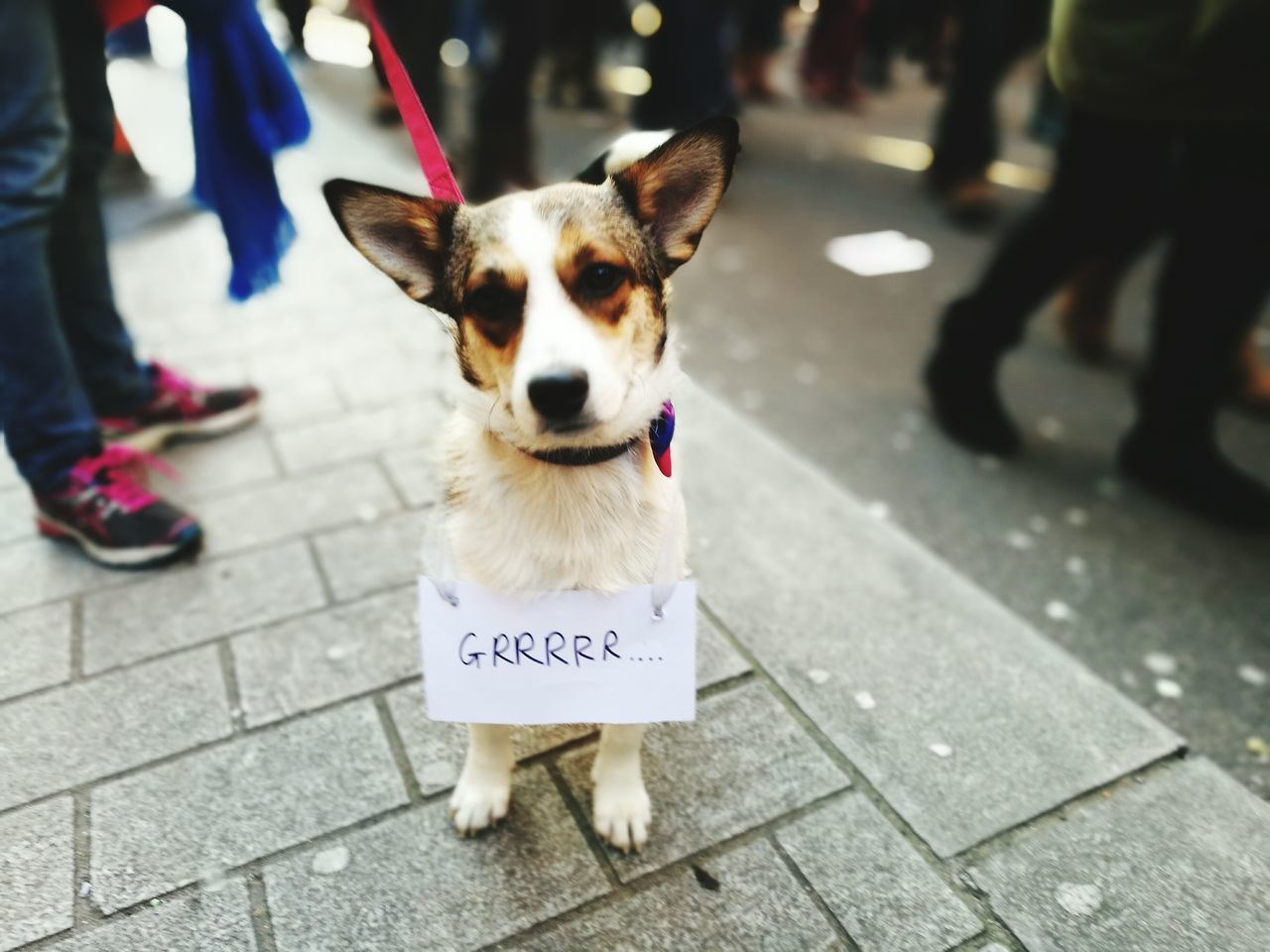 Dogs Animal Pets Womensmarch Womens March London Womensmarchonwashington No People One Animal Dog Looking At Camera Portrait City Outdoors Animal Themes Close-up Day
