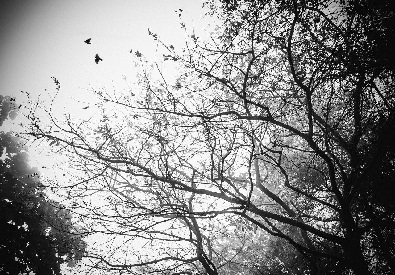 música en el aire Animals In The Wild Beauty In Nature Bnw_captures Bnw_friday_eyeemchallenge Flock Of Birds Flying Hoang Ann Low Angle View Nature Week On Eyeem