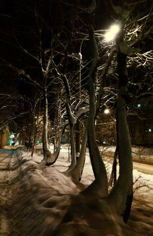 Winter Trees Snowy Trees Winter Nights Night Lights Nightphotography Night View Murmansk Small City Life Light And Shadow Trees
