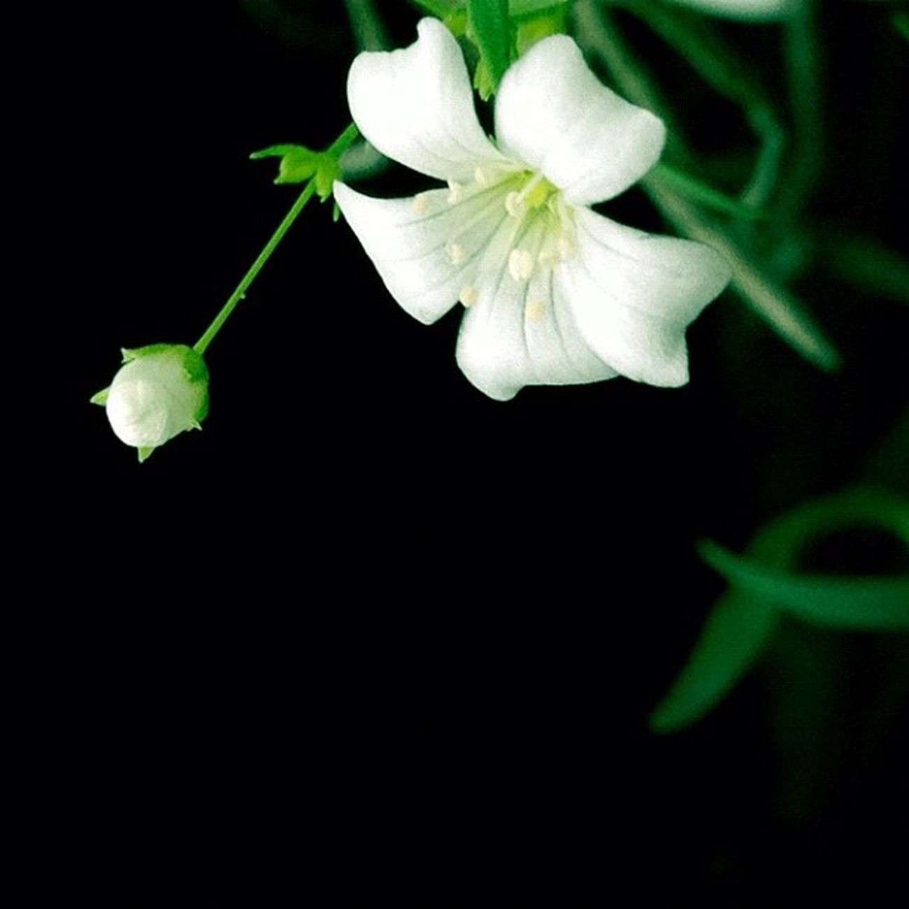 Miniature Bloom -On our balcony (Living in Singapore, a continuing series) Dhexpose Instamasters Garden Ace_ Flower Deadlydivas C Deadlydivas_edits Gang_family Ube_ Unitedbyedit Ig_outkast Amselcom Ig_one Mobileartistry Edit2gether Instauno Stunning_pics7 Igsg Icatching Bd Femme_elite Ig_artgallery Onlythe_femme Ig_everything Hdr_femme Editsrus Minimal2_nio Bestinstagramart
