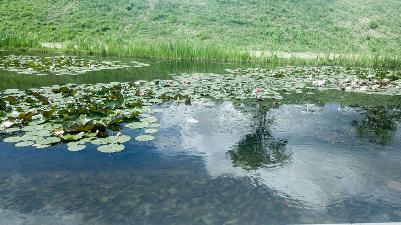 cetate oradea Water Reflection Nature Floating On Water Animals In The Wild Animal Wildlife Lake Animal Themes No People Day Beauty In Nature Grass Growth Freshness Live For The Story