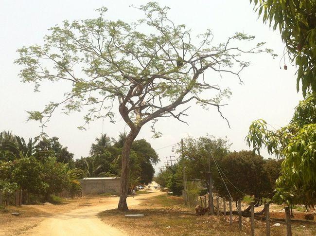 Equilibrio Nature Trees