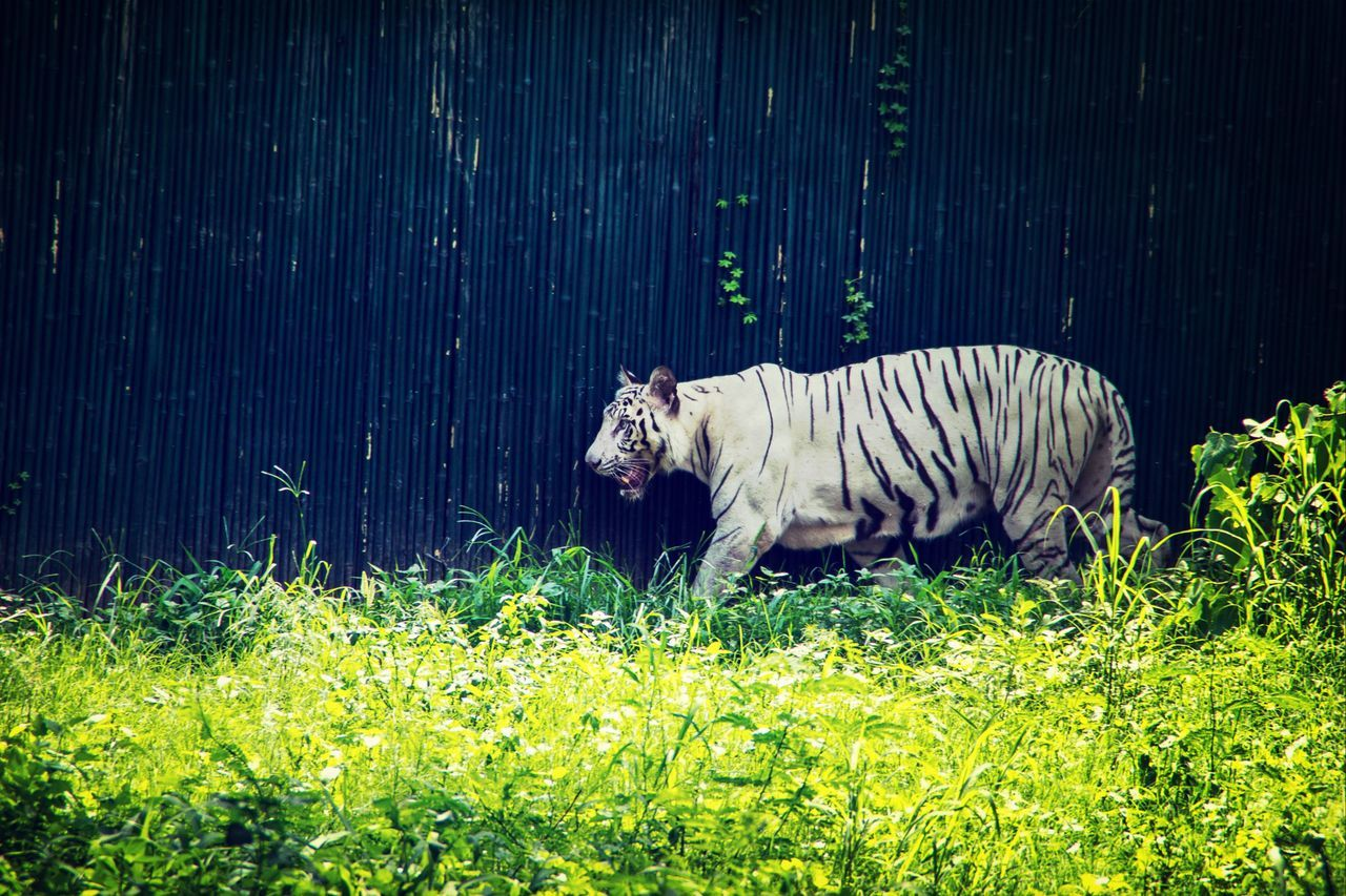 This time i was with my new lens tamron 18-200 i was testing how is it and i get this photo at delhi zoo when i shoot it i don't like but after like color adjustmemt in computer here the photo . Check This Out Enjoying Life Hanging Out Hello World