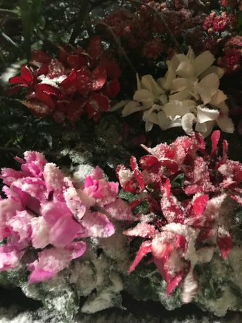 No People Growth Fragility Nature Beauty In Nature Underwater Shades Of Winter Close-up Freshness Flower