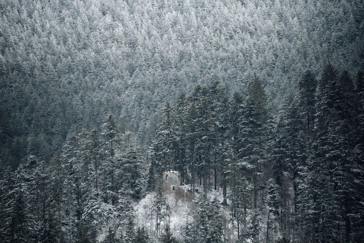 Backgrounds Beauty In Nature Building Exterior Built Structure Castle Castle View  Chapel Citadel Cold Temperature Day Forest Green Color Nature Nature Nature_collection No People Outdoors Pine Pine Tree Snow Snowflake Snowing Tree Weather Winter