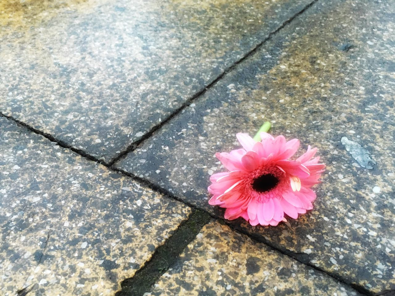 Flower Pink Pavement Sidewalk Wet Concrete Lost Discarded Lost Love Unrequited Love Rain Alone Discarded