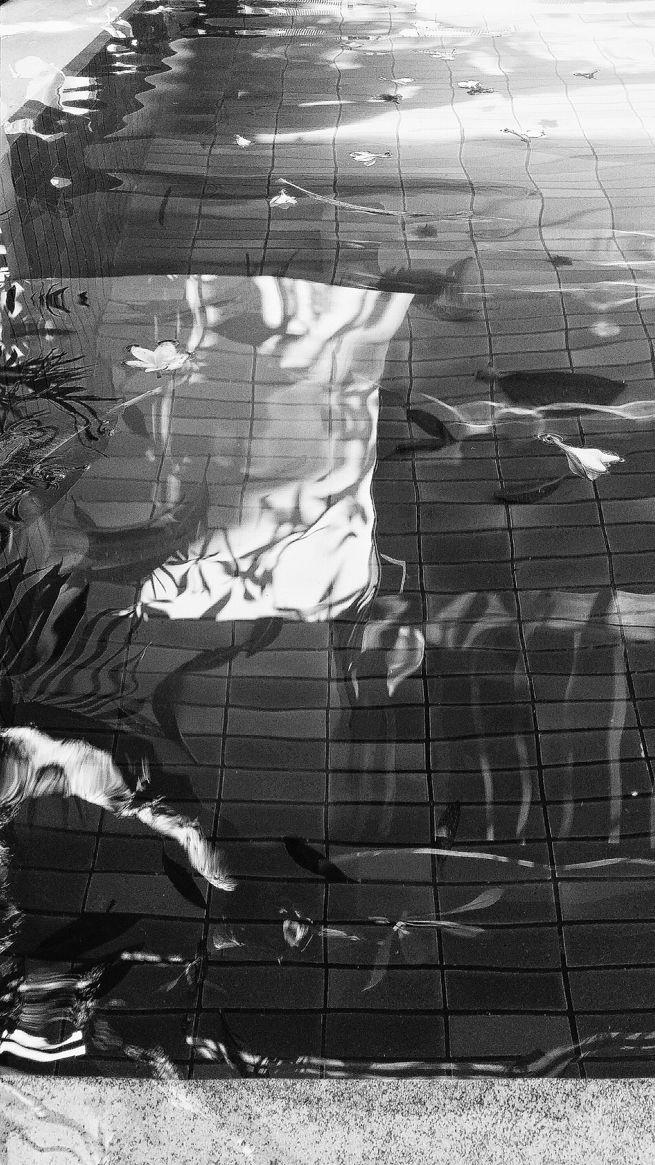 Pool Water Reflections Water Reflections Maenam Koh Samui Thailand Travelphotography Bnw Bnwcollection Bnwphotography Bnw_captures Bnw_life Bnw_travel Bnw_world Bnw_kohsamui Bnw_thailand Eyeemkohsamui Eyeemthailand Eyeemcollection Eyeemphotography