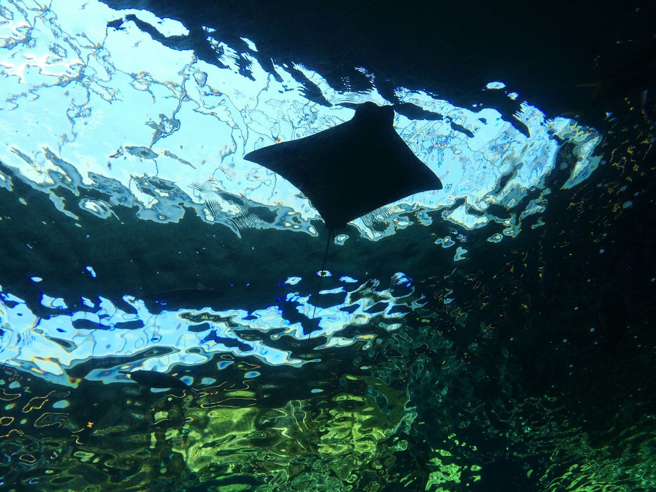 Taking Photos Hello World Enjoying Life Stingray Glowing From My Point Of View EyeEm Nature Lover Exceptional Photographs Colour Of Life Beauty In Nature Sea Life Aquarium Underwater Shootermag Ocean Oceanlife Water Backgrounds Pivotal Ideas Underwater Life Underwater Photography Underwater World