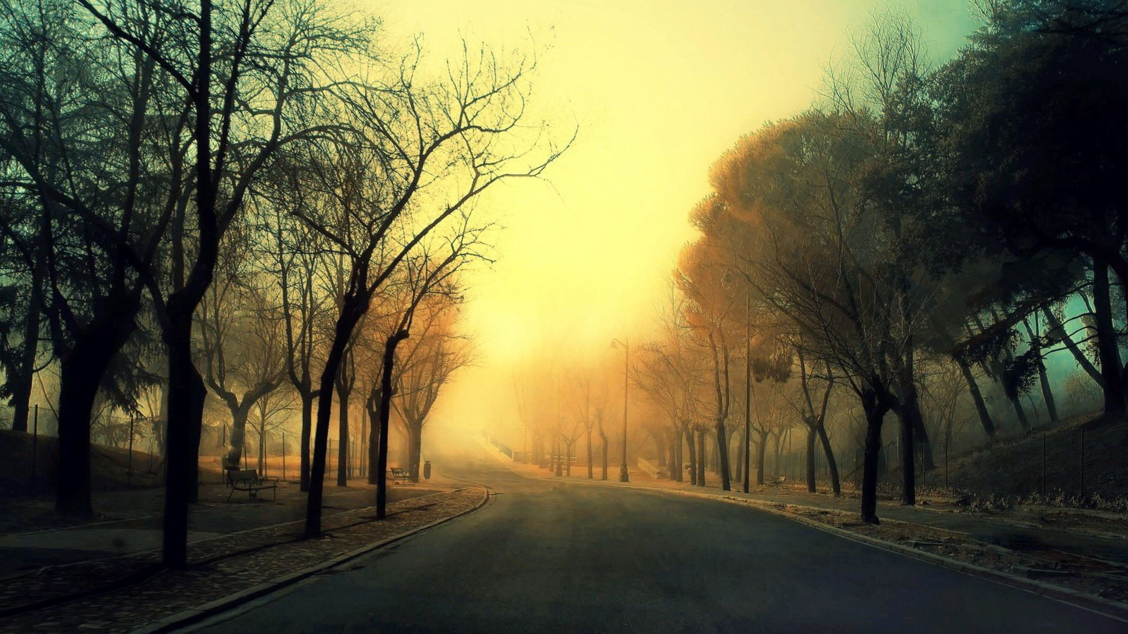 tree, road, bare tree, the way forward, transportation, diminishing perspective, tranquility, tranquil scene, road marking, scenics, fog, treelined, empty road, branch, nature, beauty in nature, vanishing point, tree trunk, orange color, foggy, outdoors, non-urban scene, sky, day, solitude, mist