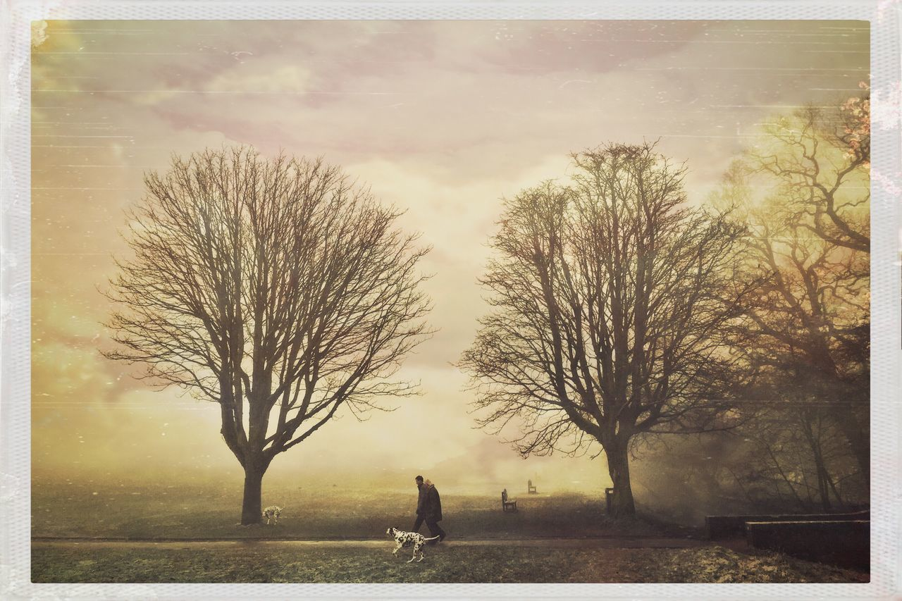 Bright New Day. Tree Bare Tree Outdoors Walking Real People Nature Day Hipstamatic Park Landscapes Trees Artistic Yoona Cheshire Laser Lemon Gel Flash Parkland Dog Walking