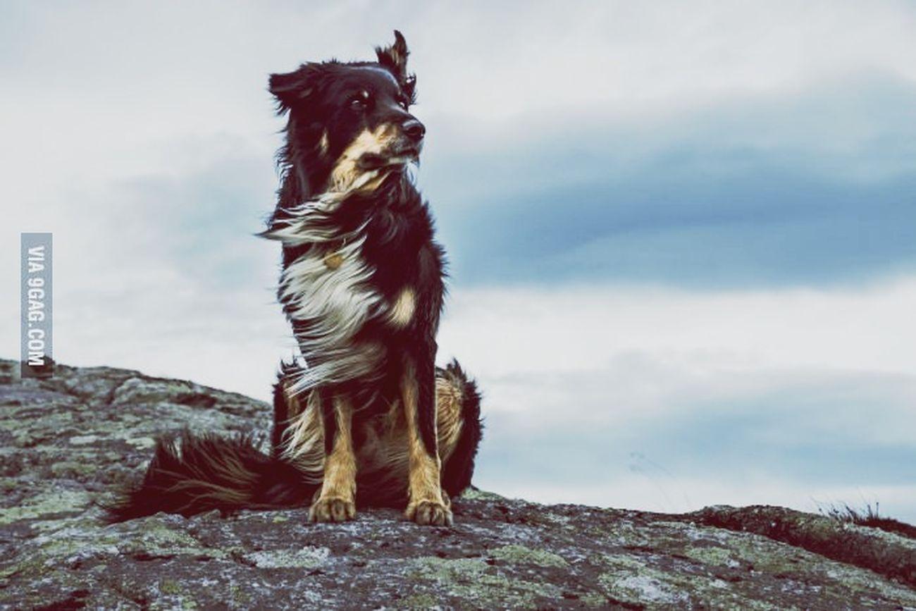 Fabulous Dogs