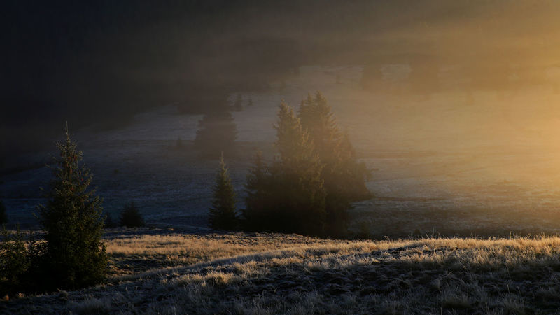Dawn Light Early Morning Lights EyeEmNewHere Pine Forest Beauty In Nature Landscape Morning Mist In Landscape Nature No People Pine Trees Rime Frost Scenics Tranquil Scene Tranquility Transylvania💕