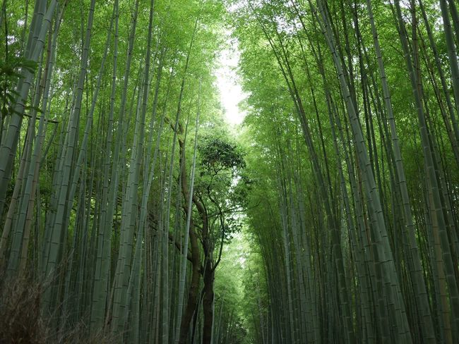 Early summer of bamboo forest 。 Hello World Getting Inspired Historical Sights Hello World