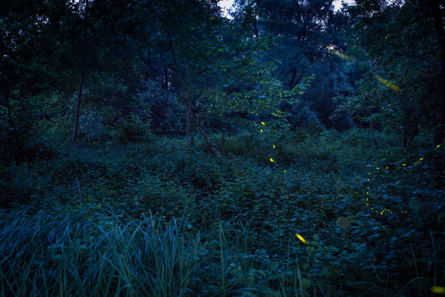 Oasi Fontane Bianche at night Atmosphere Dark Fireflies Fireflies In The Night  Mistery Atmosphere Night Night View Wood Woodlands Pivotal Ideas Color Palette Colour Of Life Colour Of Life, 43 Golden Moments