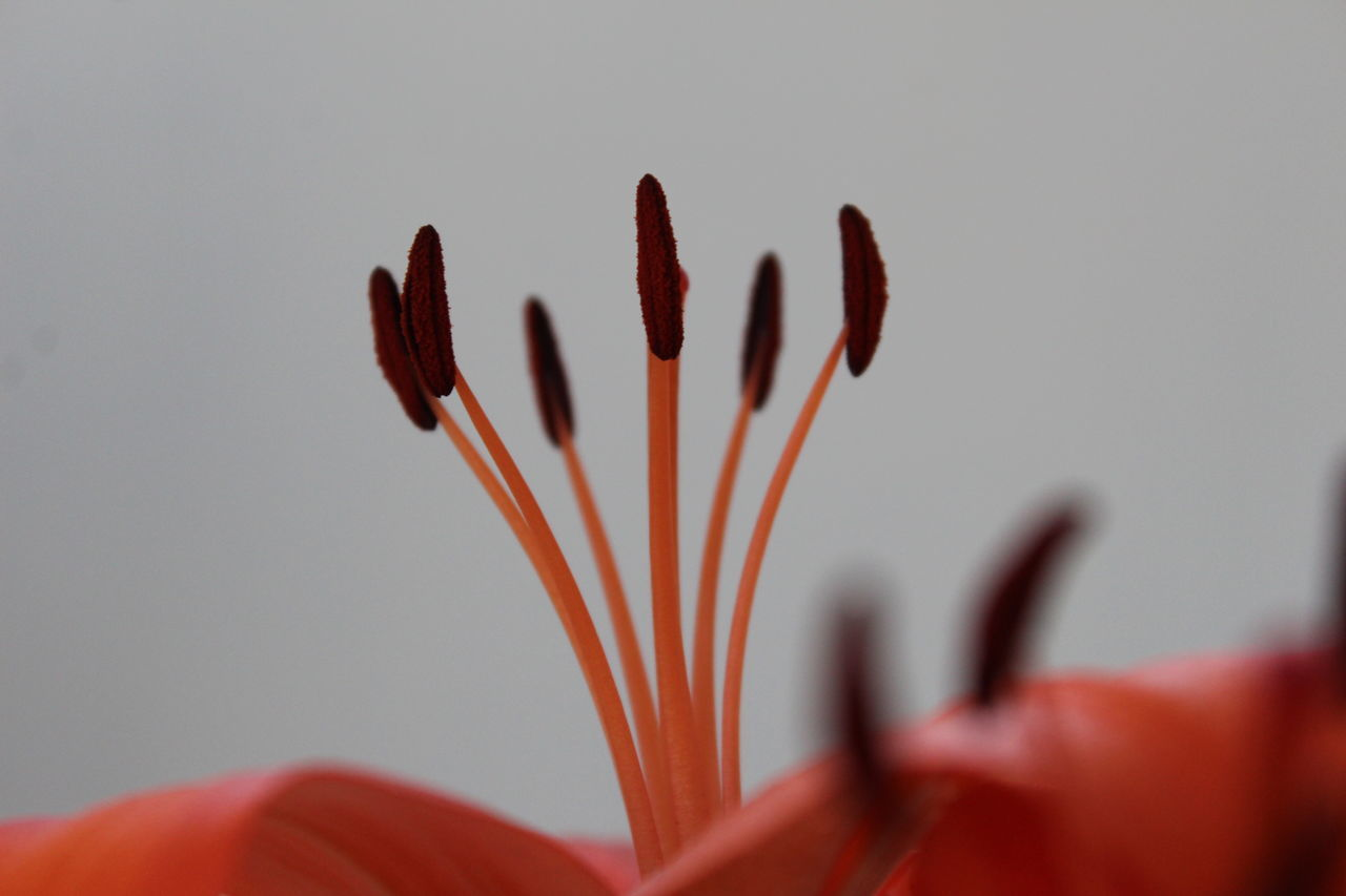 Beautiful Nature Beauty In Nature Blooming Close-up Day Flora Flower Head Flowers,Plants & Garden Fragility Freshness Nature Orange Color Plant Selective Focus Tiger Lily