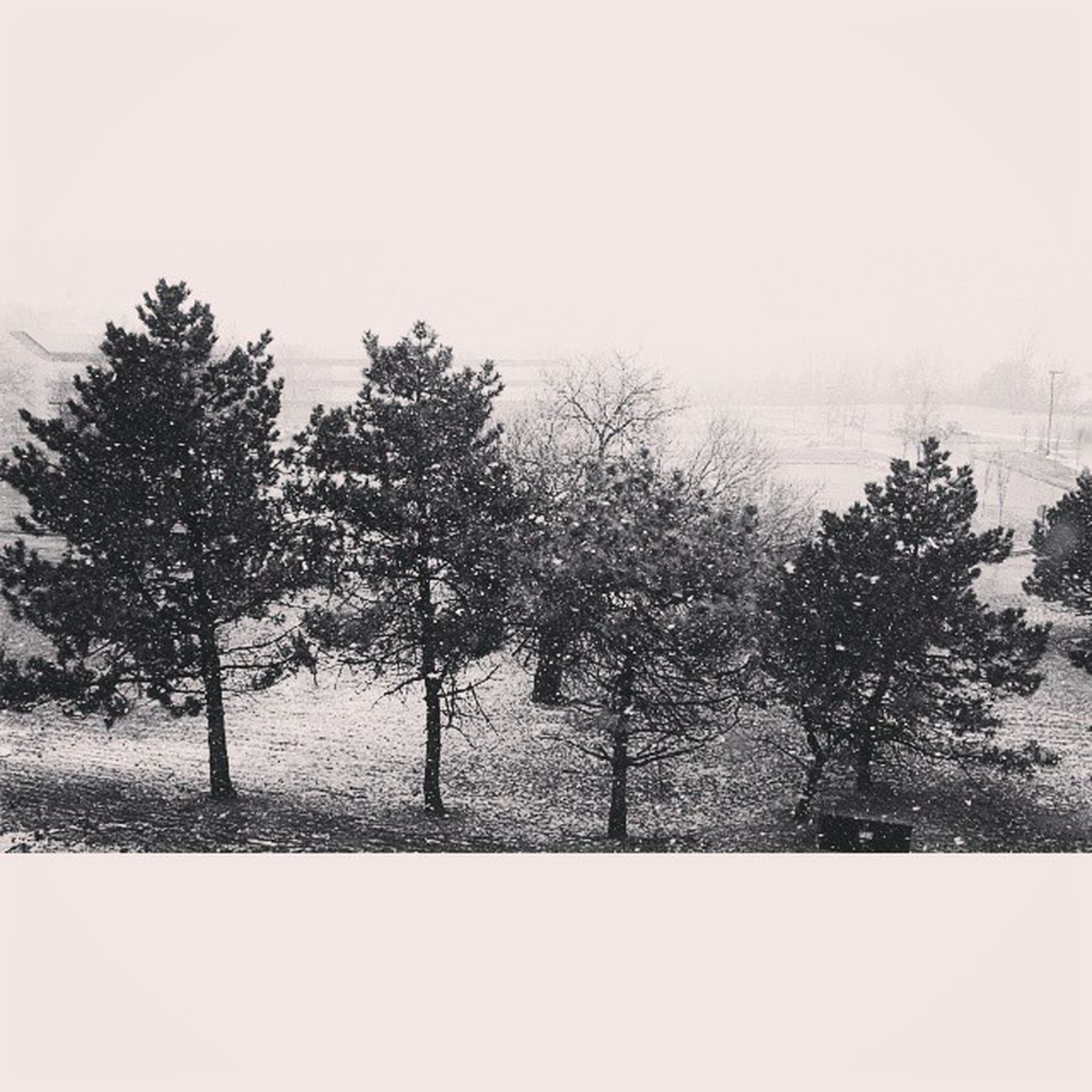 Snow Beautiful Westerville Workplaceview Blackandwhite Ohio