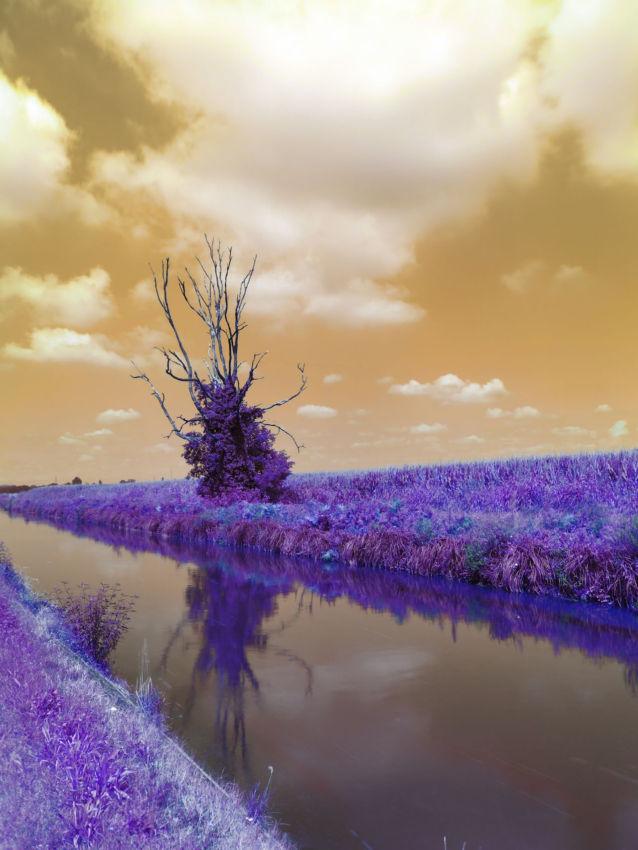 Scarecrow Purple Flower Nature Tranquil Scene No People Tree EyeEmNewHere Infrared