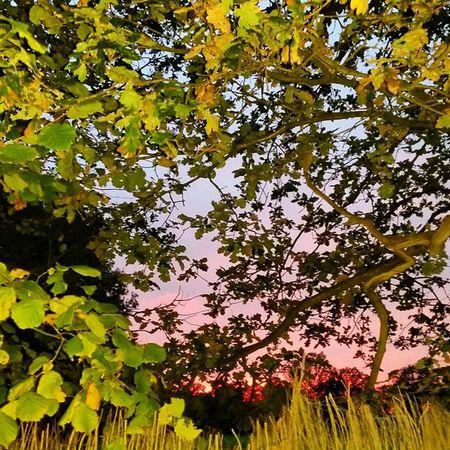 Sunsetcatcher Autumn2014 AkambaAfricangardencentre