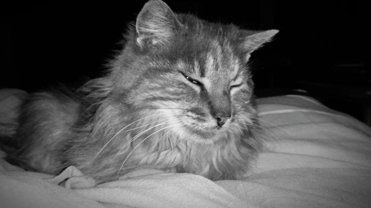 Have a nice day Pets Domestic Cat Domestic Animals Feline Close-up Cat Taking Photos Tranquility Photography EyeEm Best Shots Eyeem Best Shot Blackandwhite Portrait