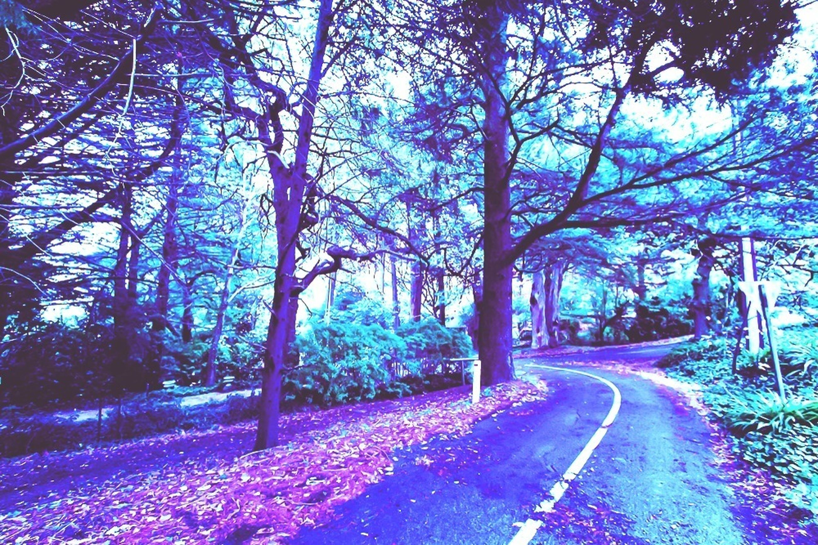 tree, the way forward, road, tranquility, nature, growth, beauty in nature, tranquil scene, branch, diminishing perspective, scenics, transportation, footpath, treelined, sunlight, park - man made space, tree trunk, outdoors, landscape, no people