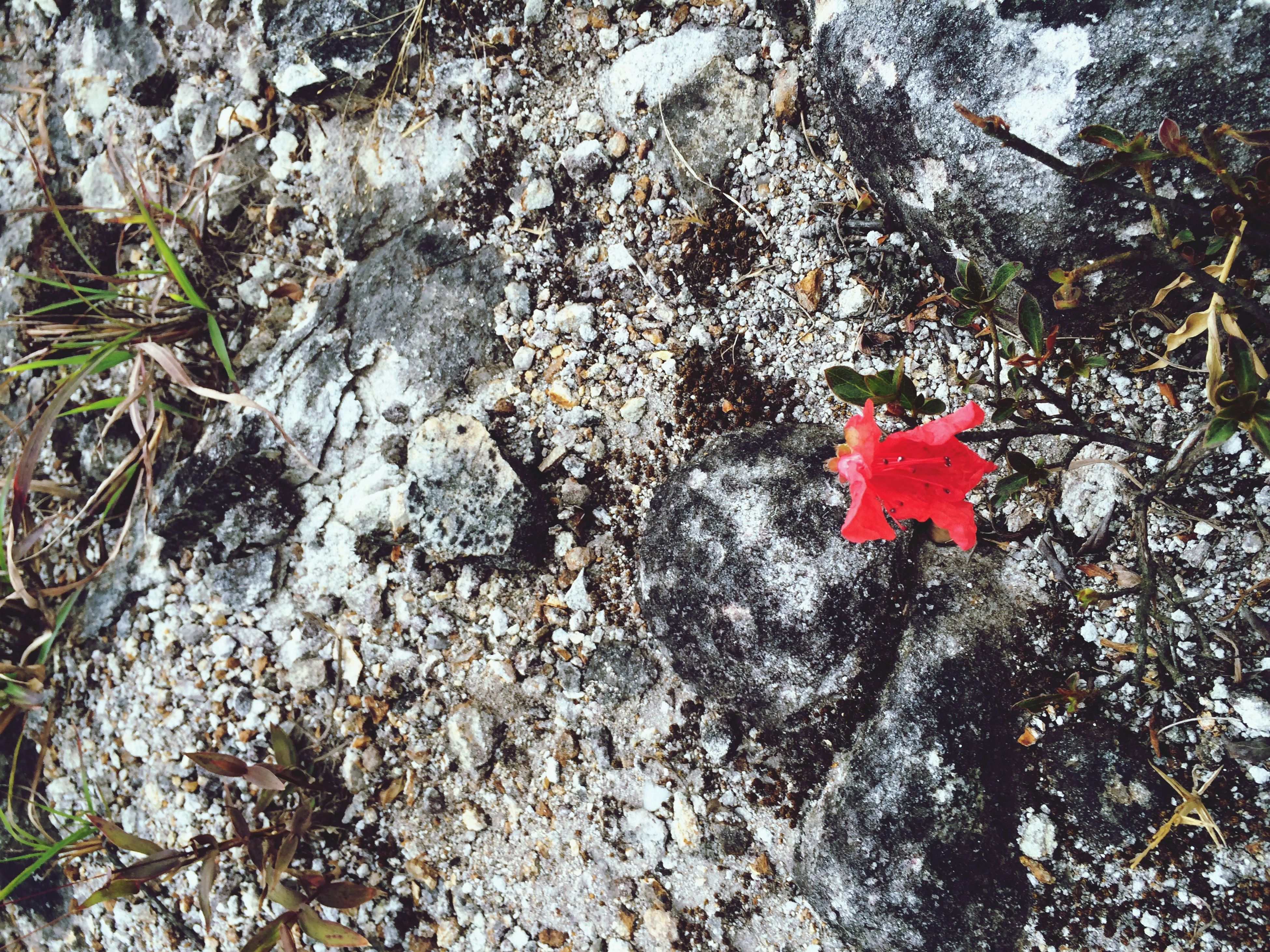 red, water, nature, rock - object, high angle view, tranquility, day, beauty in nature, tree, outdoors, growth, no people, sunlight, plant, leaf, forest, tranquil scene, close-up, rock, tree trunk
