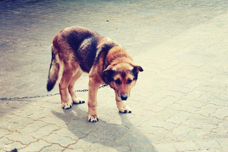 RIP meine Maus ? I Love My Dog Dogs