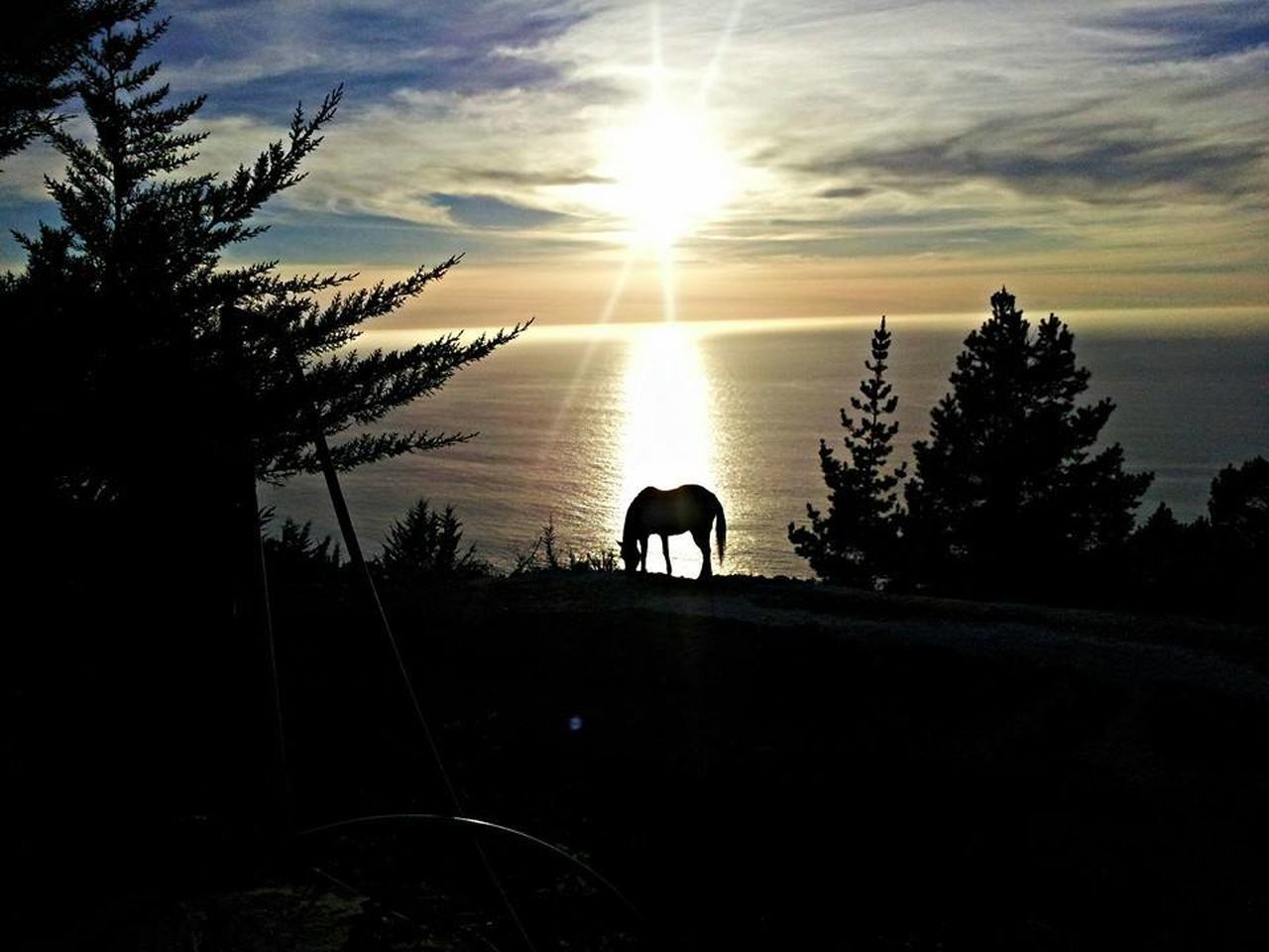 This photo op presented itself as we arrived at our cabin in Big Sur, California. My wife took the shot.Big Sur, California. Big Sur Sunsets Sunset Horses