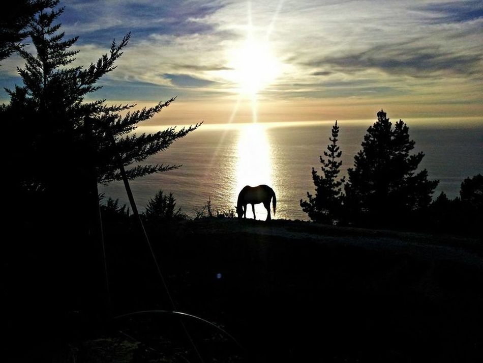 This photo op presented itself as we arrived at our cabin in Big Sur, California. My wife took the shot.Big Sur, California. Big Sur Sunsets Sunset Horses EyeEmNewHere