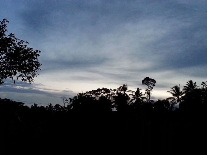 Sunset Silhouette Pahang Shadows