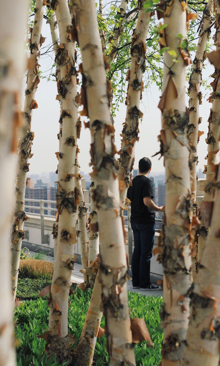 View Of Man Through Trees In City