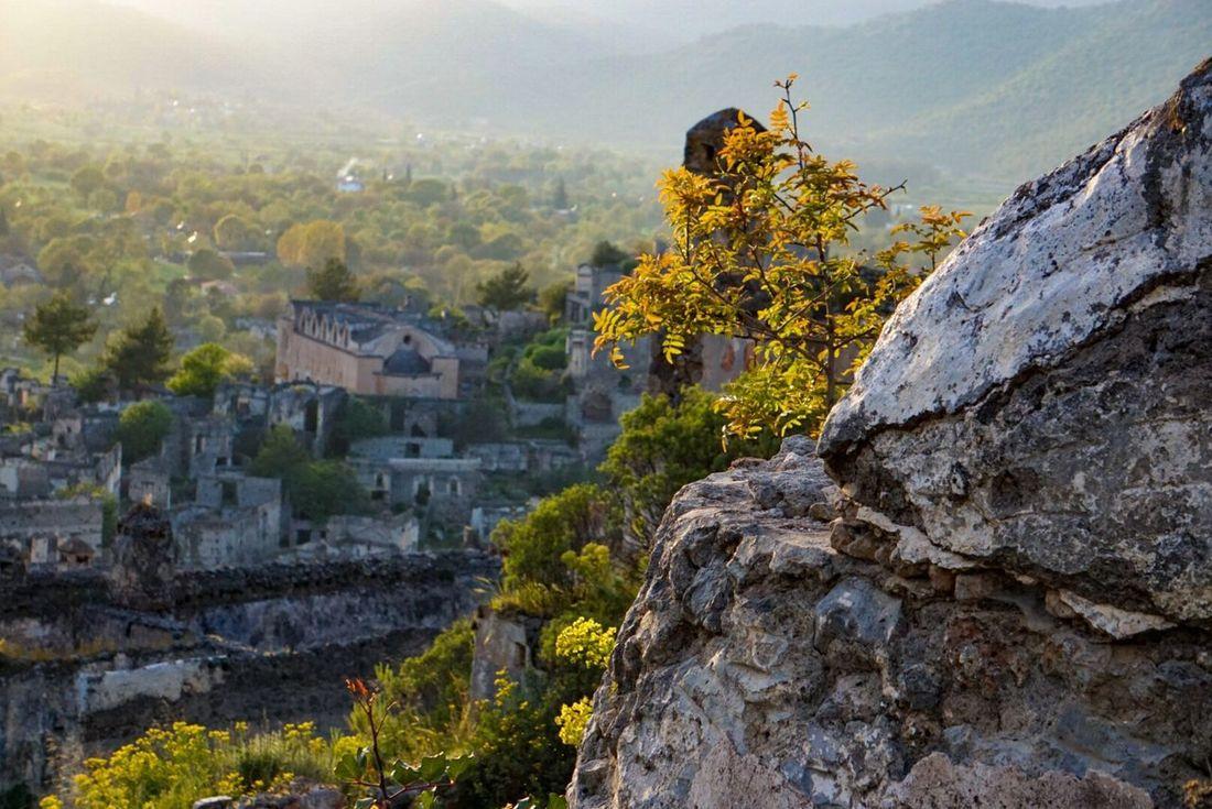 Türkiye Forest Plants Green History Stone Town Landscape Nature Photography Nature Fethiye Rome Places Abadoned Old Turkey Kayakoy