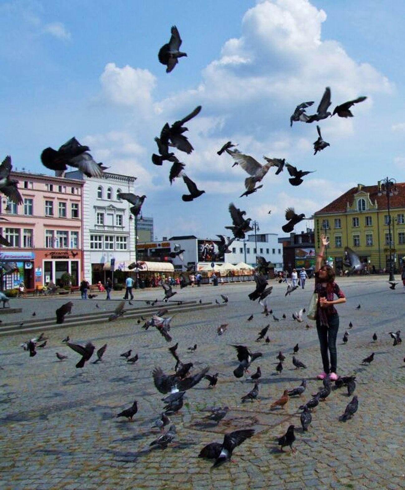 feeding pigeons... Urban Birds Taking Photos Birds Nature_collection Bydgoszcz EyeEm Birds Life In Motion Cityworldwide Hanging Out