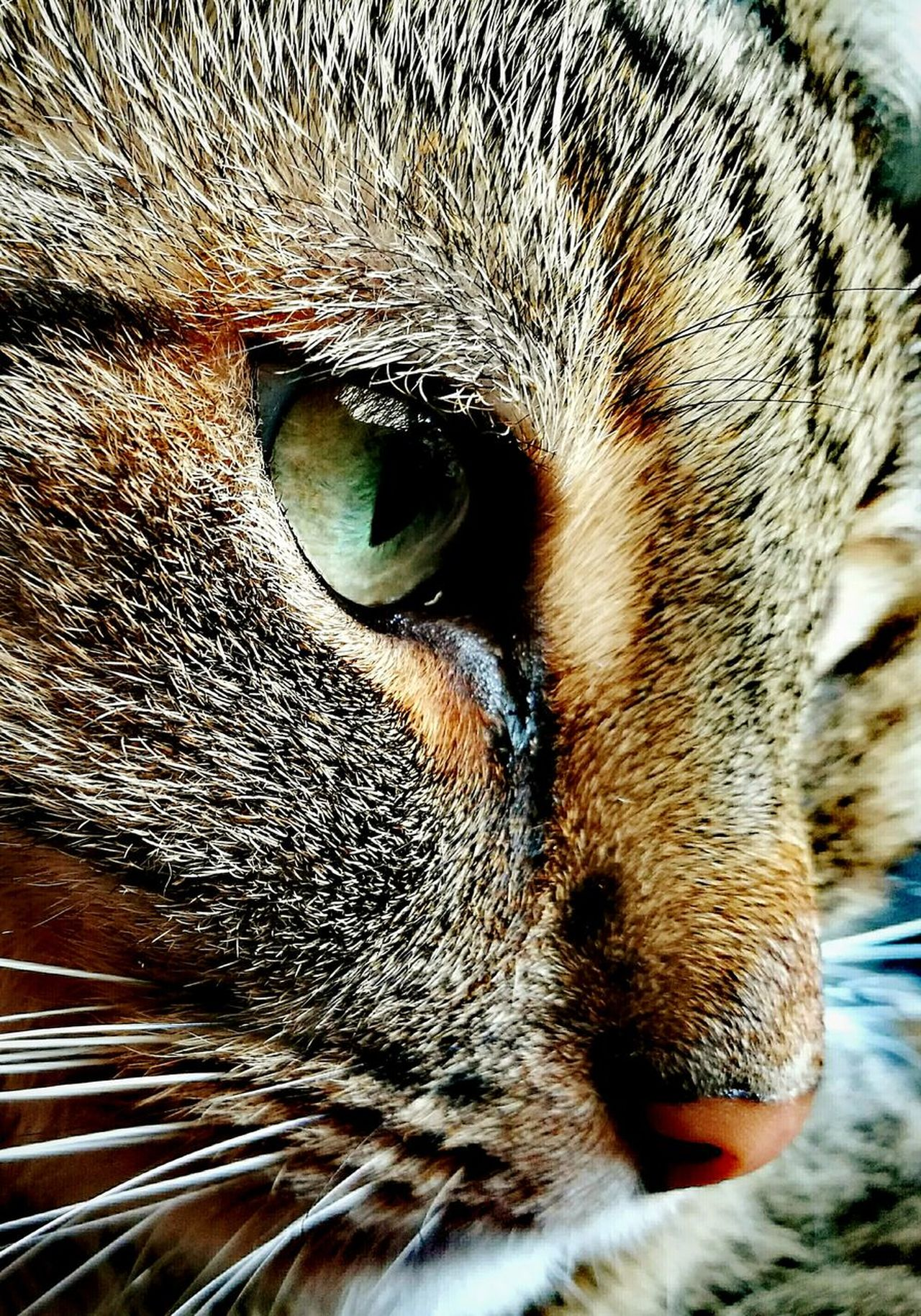 One Animal Animal Themes Close-up Domestic Animals Domestic Cat Mammal Full Frame Animal Body Part Cats 🐱 Cats Cat Cat♡ Cat Eyes Cateyes Huaweiphotography Huawei P9 Leica HuaweiP9 HuaweiP9Photography Focus On Foreground Portrait Cat Portrait Cat Portait Cat Photography