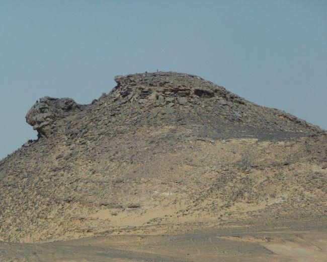 Egypte ´11 Ciel DégagédNature ExterieurtBeauté De La Nature TranquillityuJourneyjGros PlanoAnimal AnimalsaAnimal Cachél caché