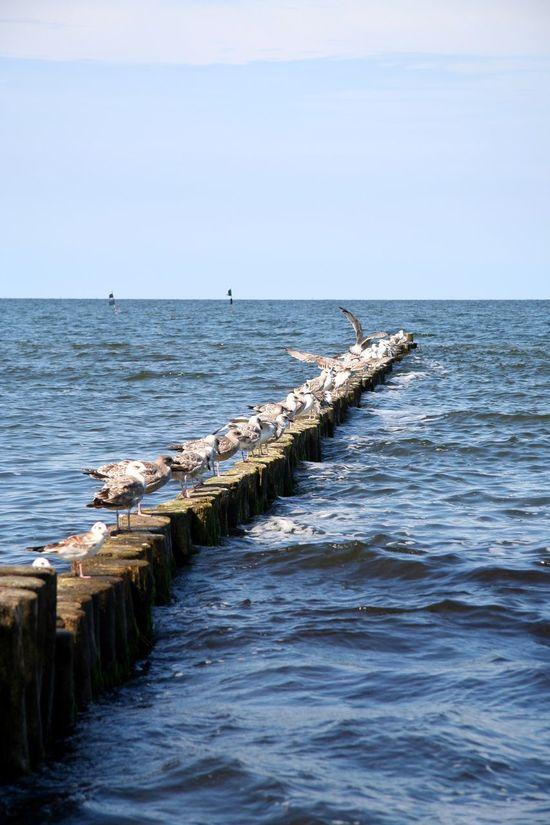 Gull Gulls Wave Sky And Clouds Waves Wellen Waves, Ocean, Nature Baltic Sea Ostsee Ostseeküste Beach Overview