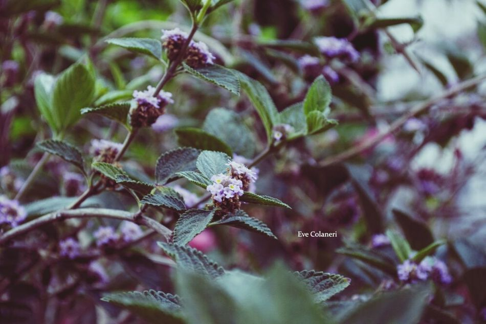 Las flores de su jardín Flowers Photooftheday Photography Naturaly & Perfect