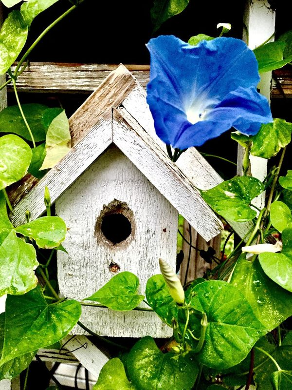 Day Birdhouse In Yard Outdoors Morning Glory Flower Tranquil Scene Nature Close-up No People Beauty In Nature Scenics Lookingoutside Butterfly Garden Tranquility Garden Photography