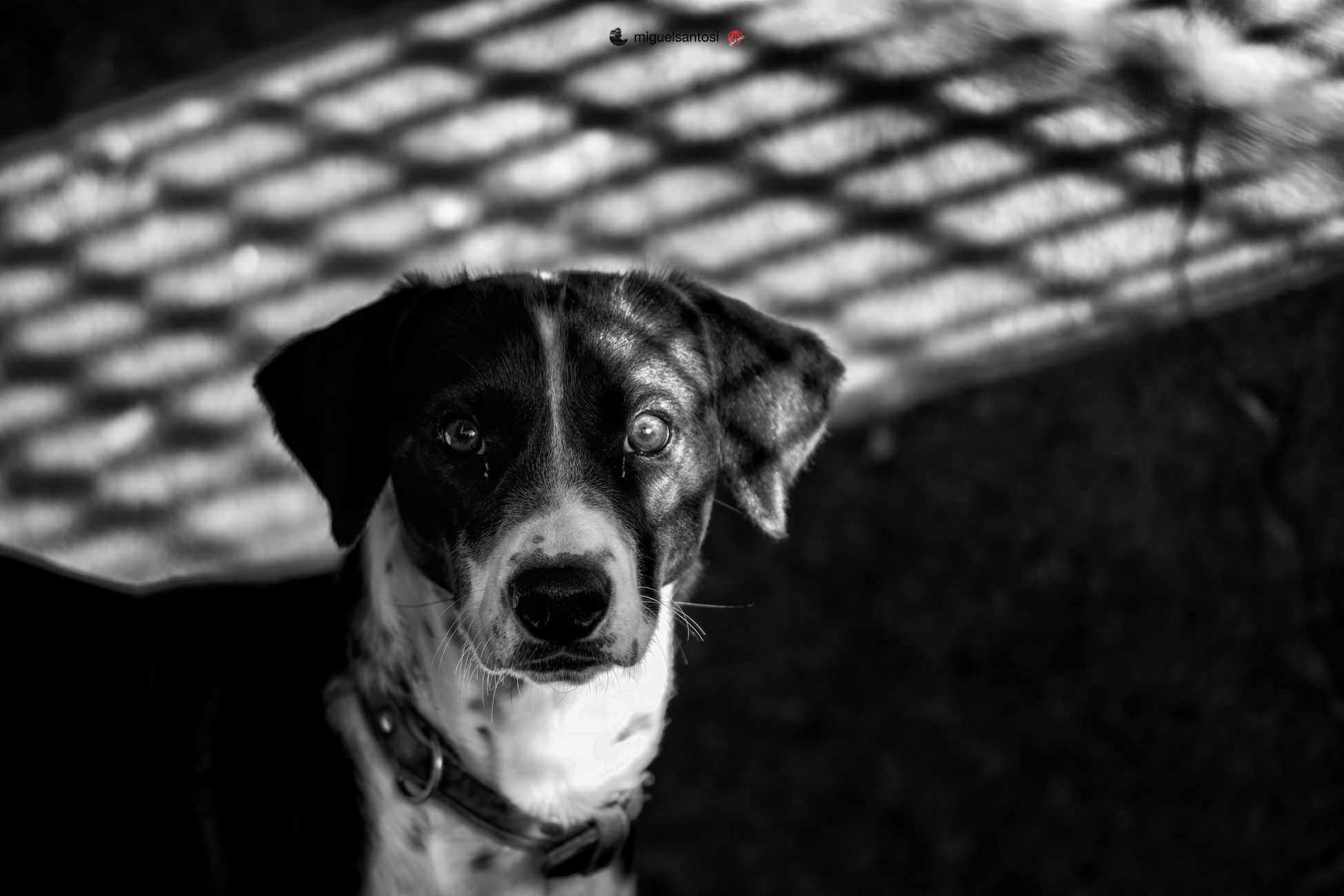 Doglover Dog Bw Bw_lover BW_photography Bnw Bnw_collection Bnw_captures Bnw_life Bnwphotography Blackandwhite Black And White Black & White Pretoebranco Preto & Branco Pretoebrancofotografia Fotografiapretoebranco Cao Dogs Shadow Shadows & Lights Shadow And Light Dog Pets Domestic Animals One Animal Outdoors Portrait Looking At Camera Close-up