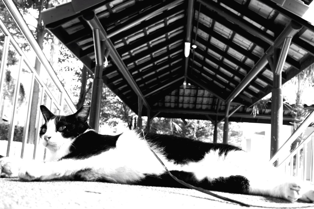 Domestic Cat Cat No People Feline Street Photography Animal Themes Outdoors Watching You Stretched Out