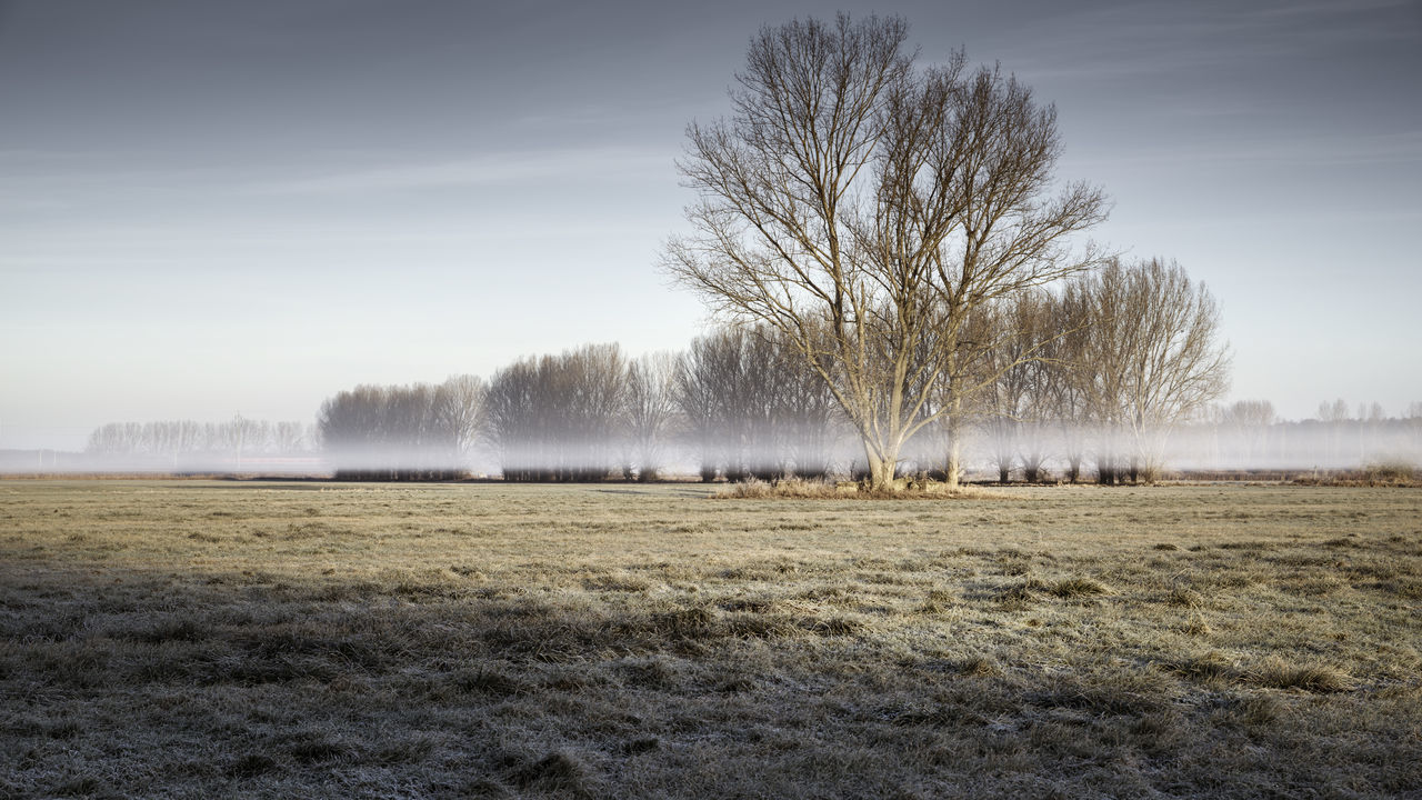 Foggy sunrise on a field in Brandenburg, Germany Agriculture Barren Landscape Beauty In Nature Brandenburg Day Fog Fog On A Field Foggy Sunrise Germany Golden Light Grass Land Landscape Misty Sunrise Nature New Day No People Outdoors Philipp Dase Scenics Sky Teltow-flaeming Tranquil Scene Tranquility Tree Tree On A Field