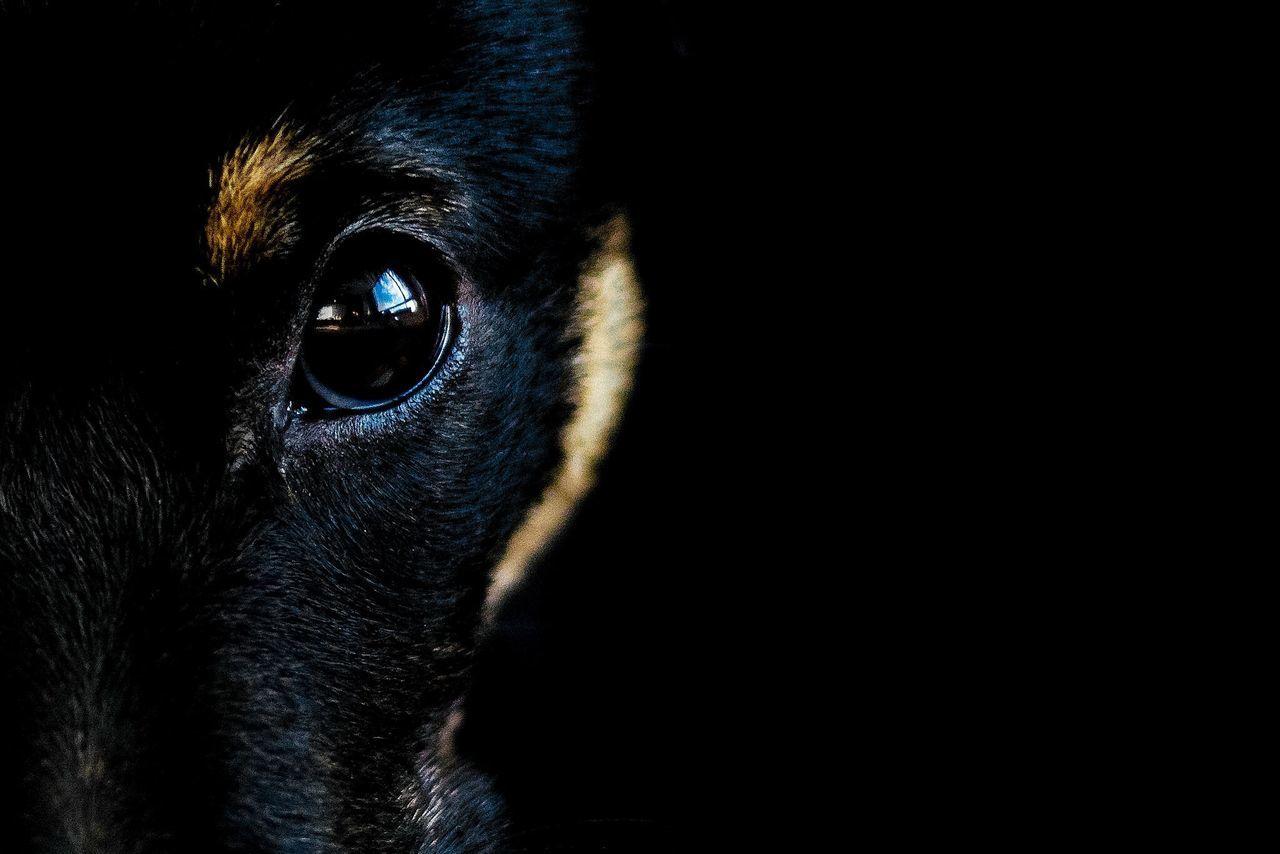 Beautiful stock photos of eyes, Animal Eye, Animal Head, Animal Themes, Black Background