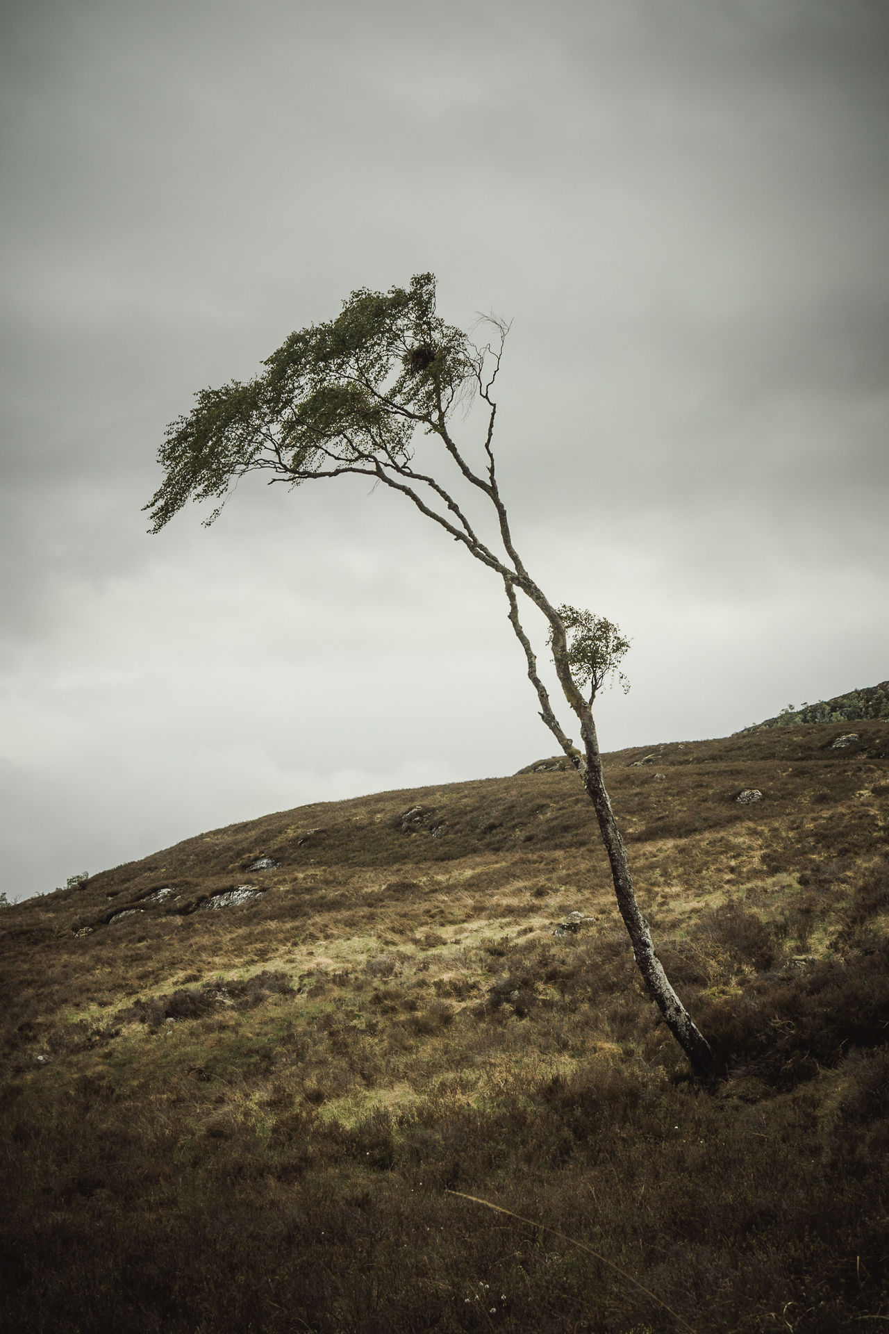 Beauty In Nature Branch Day Dead Tree Desolate Grass Highlife Landscape Landscape_Collection Lone Loneliness Mountain Nature No People Outdoors Scenics Scotland Scotland Highlands Sky The Great Outdoors - 2017 EyeEm Awards Tranquil Scene Tranquility Tree Tree Trees For Life