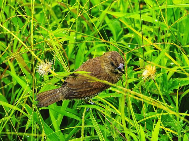 Leafs 🍃 Awesome_nature_shots Atmosphere Of Peace Birds_collection Birds Of EyeEm  Animals In The Wild Green Leaves Awesome Nature Green Green Green!  Check This Out 😊 Hiking_walking Birds Wildlife Bird Eating Grass Seeds EyeEm Best Shots - Nature Nature On Your Doorstep Popular Photo Details Of Nature Unique Perspectives Original Experiences Close Up Nature Birds🐦⛅ Animals Posing Water Droplets Its Raining