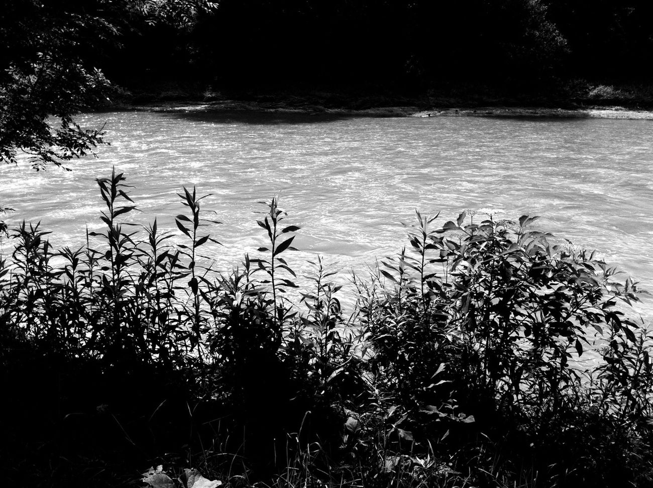 Nature River Monochrome Blackandwhite