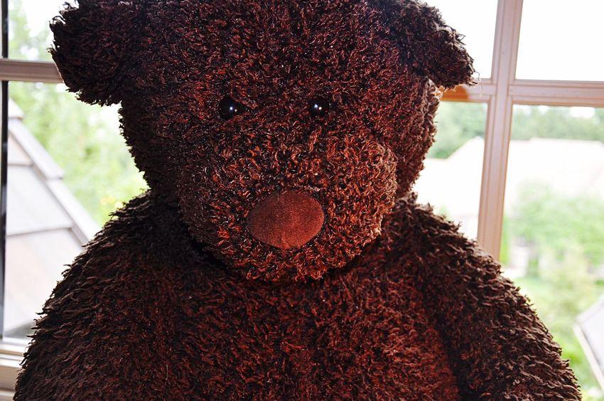 🍫 Chocolate♡ Bear Stuffy Old Stuffed Stuffed Animals Softness Dark Brown Furry Friends