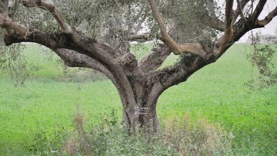 In Misurata Libya ... Nature .... The Explorer - 2014 EyeEm Awards